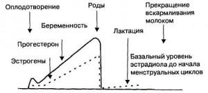 Менструация при выкидыше