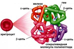 гемоглобин при месячных