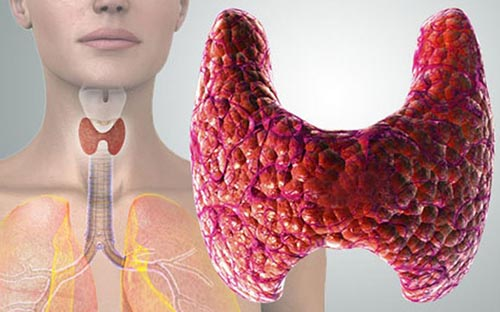 Причины влияния щитовидной железы на менструальный цикл