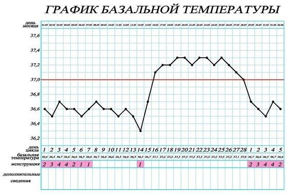 Определение овуляции с помощью графика базальной температуры