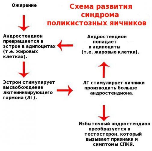 Схема развития поликистоза яичников